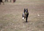 Why dogs need exercise?