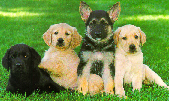 Quotes About Backyard Breeders :   Images Of Puppies And Dogs Puppies And Dogs For Sale Puppies And