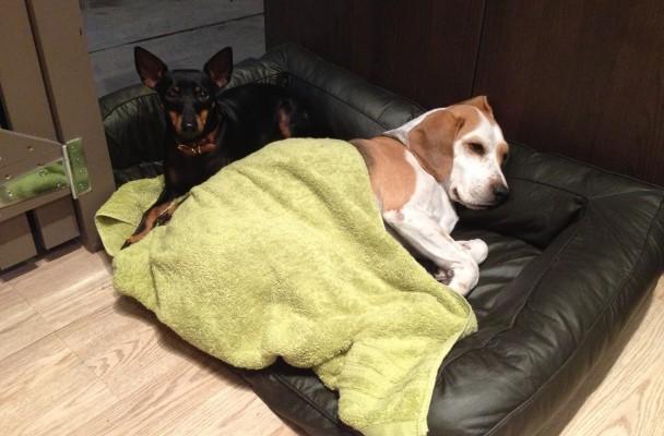 Hugo and Milo
