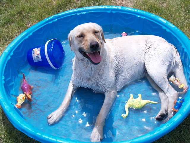 How To Keep Your Dog Cool And Comfortable In Summer Dog Grooming Training Eastern Suburbs Sydney