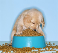 puppywithkibblebowl01