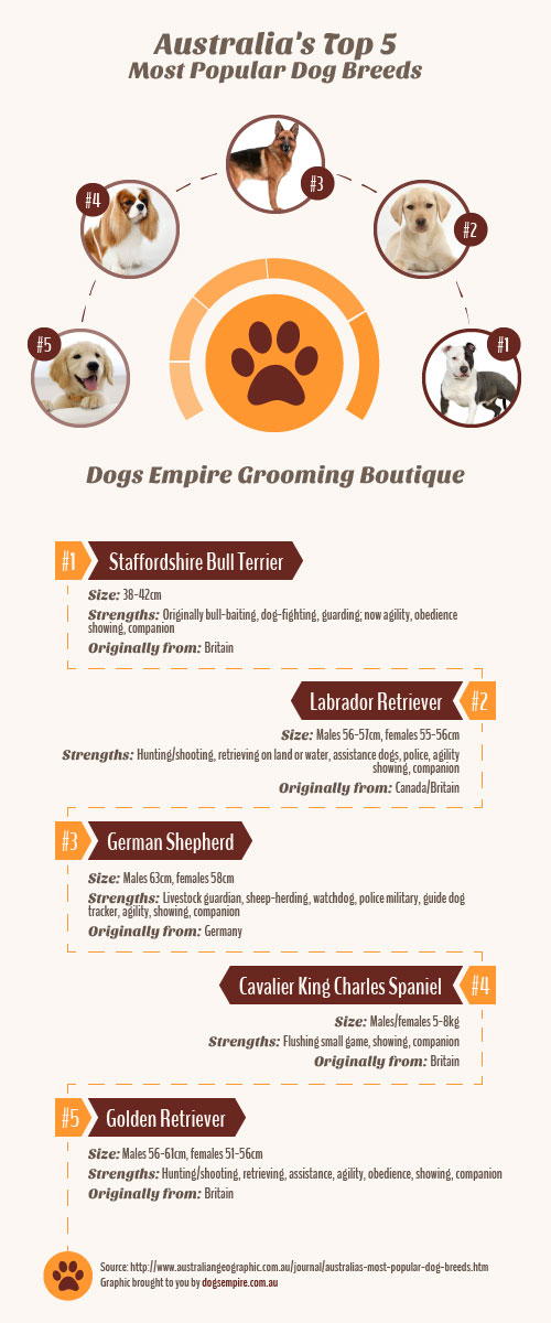 most popular dog breeds australia infographic