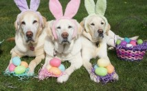 Dogs in Danger During Easter